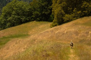 One very happy dog, roaming free!