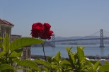 Rose and the Bay Bridge