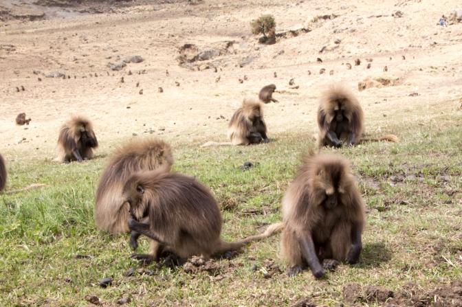 Ethiopia: Into the Simien Mountains