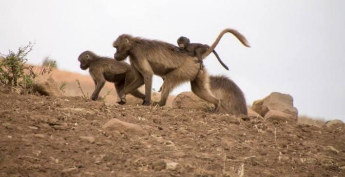Ethiopia: Further into the Simien Mountains